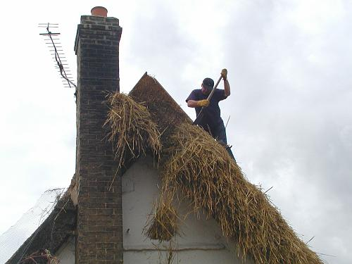 Cutting the thatch