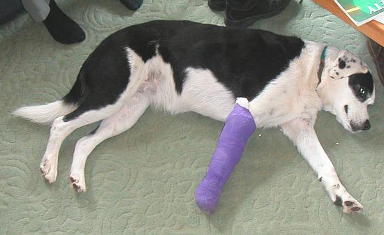 Tilly in bandage