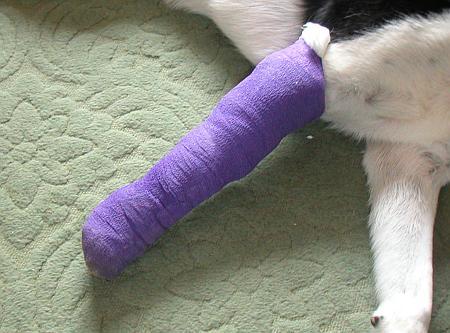 The bandage