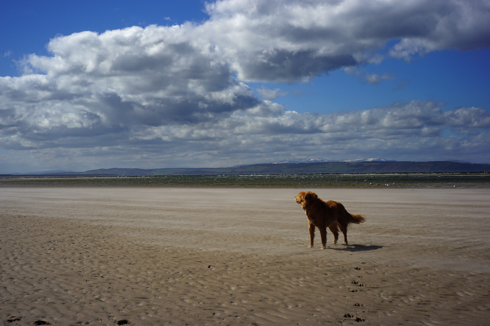Jessie on Nairn east beach